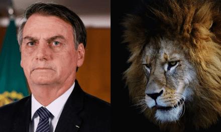 Bolsonaro publica vídeo em que se compara com 'leão' cercado por opositores 'hienas'