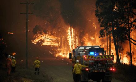 Cerca de 480 milhões de animais já morreram em decorrência dos incêndios florestais na Austrália